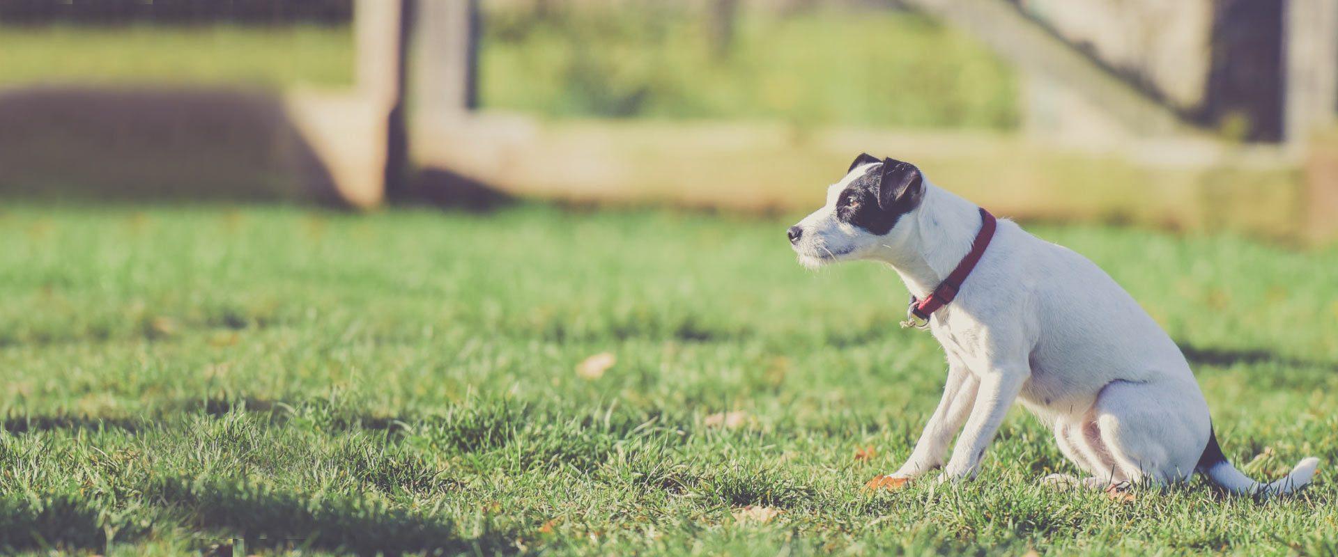 Dog Training Classes York