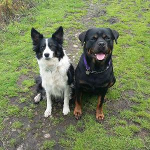 Magic and her Border Collie friend Shade