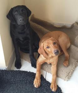 Puppies Max and Chunk